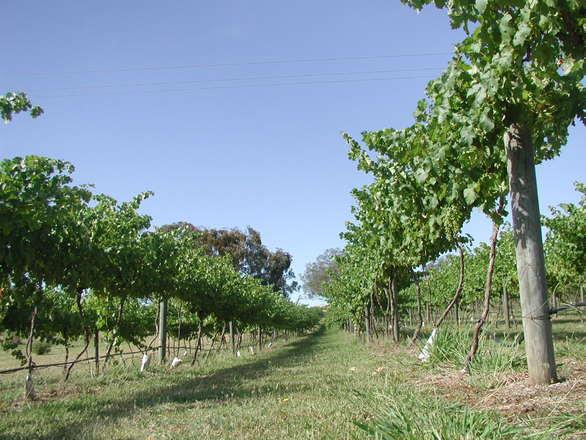 logiciel viticulture
