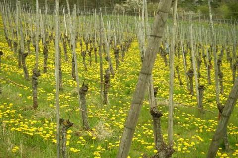 Un logiciel de gestion agricole pour se simplifier la vie