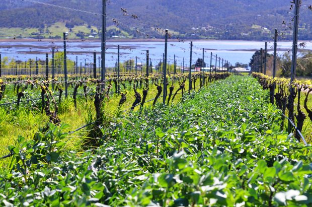 exploitation viticulture